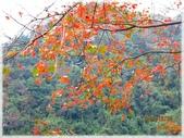尖石鄉、秀巒村、青蛙石、薰衣草森林:陽具公園_002.jpg