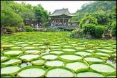 大台北地區:雙溪公園大王蓮_041.jpg