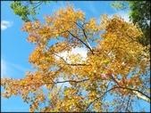 尖石鄉、秀巒村、青蛙石、薰衣草森林:秀巒楓樹林_62.jpg