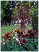 青年公園花卉欣賞、花展、恐龍展等:青年公園_0055.jpg