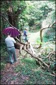 三峽風景區:紫微天后宮步道探路_061.jpg