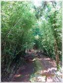 七星山公園、夢幻湖、冷水坑、中正山:中正山步道_009.jpg