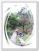 土城桐花公園、山中湖、文筆山、太極嶺:土城桐花公園_020.jpg