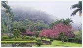 三峽風景區:行修宮辛夷花-1_001.jpg