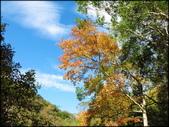 尖石鄉、秀巒村、青蛙石、薰衣草森林:秀巒楓樹林_54.jpg