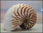 各種特展及參觀:貝殼博物館_003.jpg