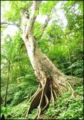 三峽風景區:大板根原始森林區_027.jpg