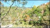 尖石鄉、秀巒村、青蛙石、薰衣草森林:秀巒楓樹林-1_007.jpg