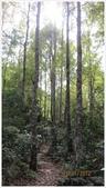尖石鄉、秀巒村、青蛙石、薰衣草森林:秀巒村楓樹林-1_17.jpg