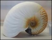 各種特展及參觀:貝殼博物館_005.jpg