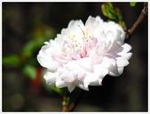 好友聚餐、歡唱、友人贈花、賞花:春遊中正紀念堂_01.jpg