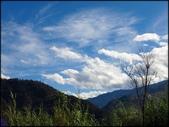尖石鄉、秀巒村、青蛙石、薰衣草森林:秀巒楓樹林_179.jpg