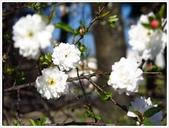 好友聚餐、歡唱、友人贈花、賞花:春遊中正紀念堂_10.JPG