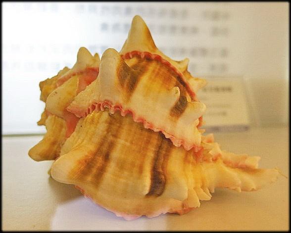 各種特展及參觀:貝殼博物館_014.jpg