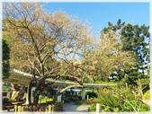 立法院、台北賓館、自由廣場、中正紀念堂:梅櫻爭豔_004.jpg