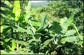 三峽風景區:紫微聖母環山步道探路_004.jpg