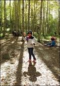 尖石鄉、秀巒村、青蛙石、薰衣草森林:秀巒楓樹林_118.jpg