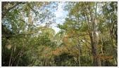 尖石鄉、秀巒村、青蛙石、薰衣草森林:秀巒村楓樹林-1_18.jpg