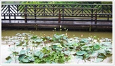 大溪老街‧公園、八德埤塘生態公園、大古山步道:八德埤塘生態公園-1_014.jpg