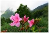 太平山三日遊:太平山三日遊01_205.jpg