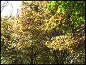 中部旅遊:福壽山農場_032.jpg