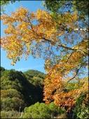 尖石鄉、秀巒村、青蛙石、薰衣草森林:秀巒楓樹林_161.jpg