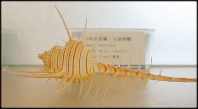 各種特展及參觀:貝殼博物館_017.jpg