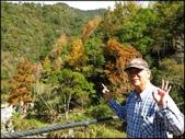 尖石鄉、秀巒村、青蛙石、薰衣草森林:秀巒楓樹林_50.JPG