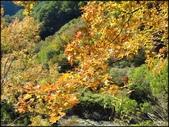 尖石鄉、秀巒村、青蛙石、薰衣草森林:秀巒楓樹林_158.jpg