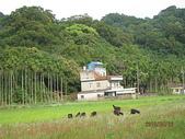 鄭漢步道、龍昇湖、將軍牛乳廠、頭屋三窪坑步道:頭屋三窪坑步道 123
