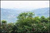 三峽風景區:紫微天后宮步道探路_085.jpg