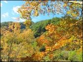 尖石鄉、秀巒村、青蛙石、薰衣草森林:秀巒楓樹林_65.1.jpg