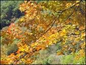 尖石鄉、秀巒村、青蛙石、薰衣草森林:秀巒楓樹林_66.jpg