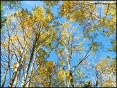 尖石鄉、秀巒村、青蛙石、薰衣草森林:秀巒楓樹林_96.jpg