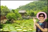 大台北地區:雙溪公園大王蓮_064.jpg