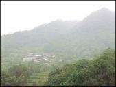 貓空樟樹步道、杏花林:樟樹步道_10.jpg