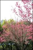 立法院、台北賓館、自由廣場、中正紀念堂:中正紀念堂櫻花-1_73.jpg