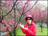 龜山壽山巖觀音寺石雲森林步道、福源山步道:壽山岩公園櫻花綻放-1_11.jpg