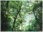七星山公園、夢幻湖、冷水坑、中正山:中正山步道_013.jpg