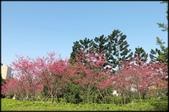 立法院、台北賓館、自由廣場、中正紀念堂:中正紀念堂櫻花-1_08.jpg