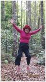 尖石鄉、秀巒村、青蛙石、薰衣草森林:秀巒村楓樹林-1_10.jpg