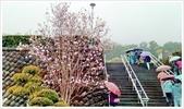 三峽風景區:行修宮辛夷花-1_002.jpg