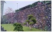 三峽風景區:行修宮辛夷花-1_004.jpg