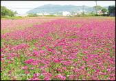桃園地區風景區:2020桃園花彩節_015.jpg