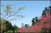 立法院、台北賓館、自由廣場、中正紀念堂:中正紀念堂櫻花-1_34.jpg