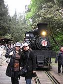 阿里山之旅:櫻花季-9