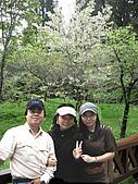 阿里山之旅:可惜部是春天  櫻花可以再多一點的