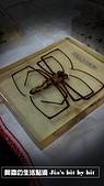 菜鳥 七年級:【生物課】白額高腳蛛標本 (俗稱「ㄌㄚˊ ㄍㄧㄚˊ」)