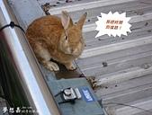 遇見來福, Rabbit Lai-Fu:DSCI0783.JPG