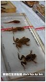 菜鳥 七年級:【生物課】青蛙標本
